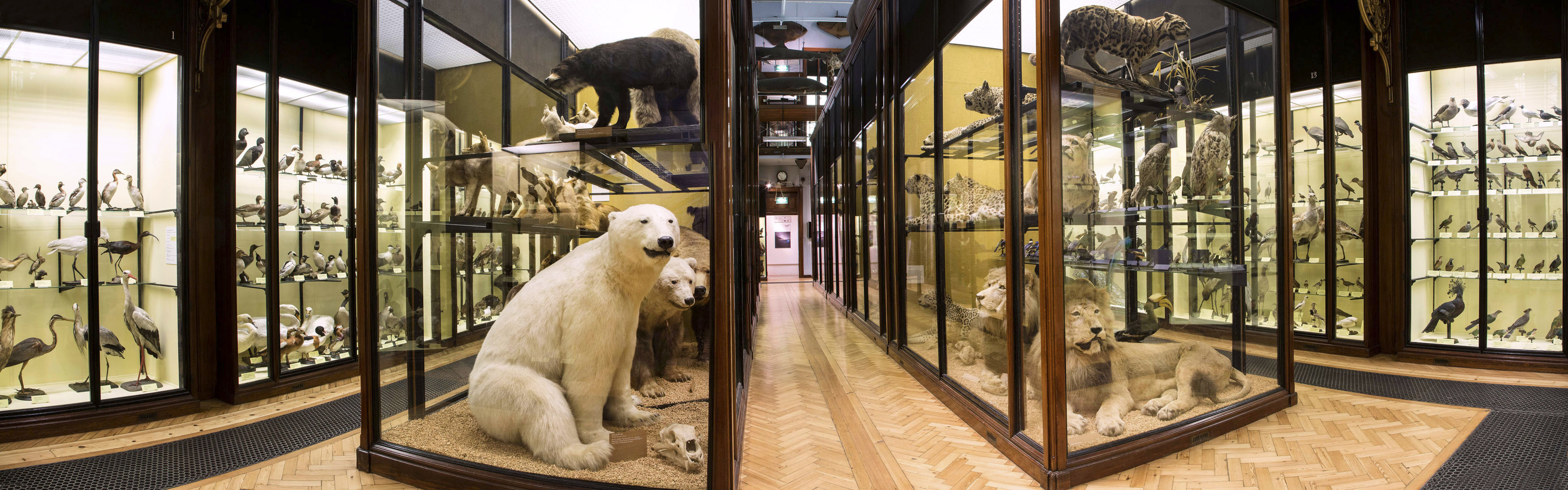 Natural History at its Victorian best